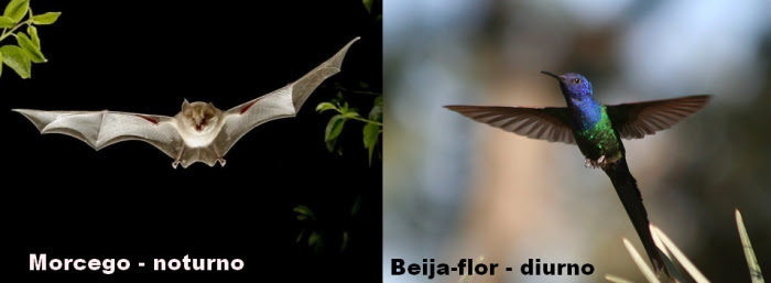 morcego e beija-flor