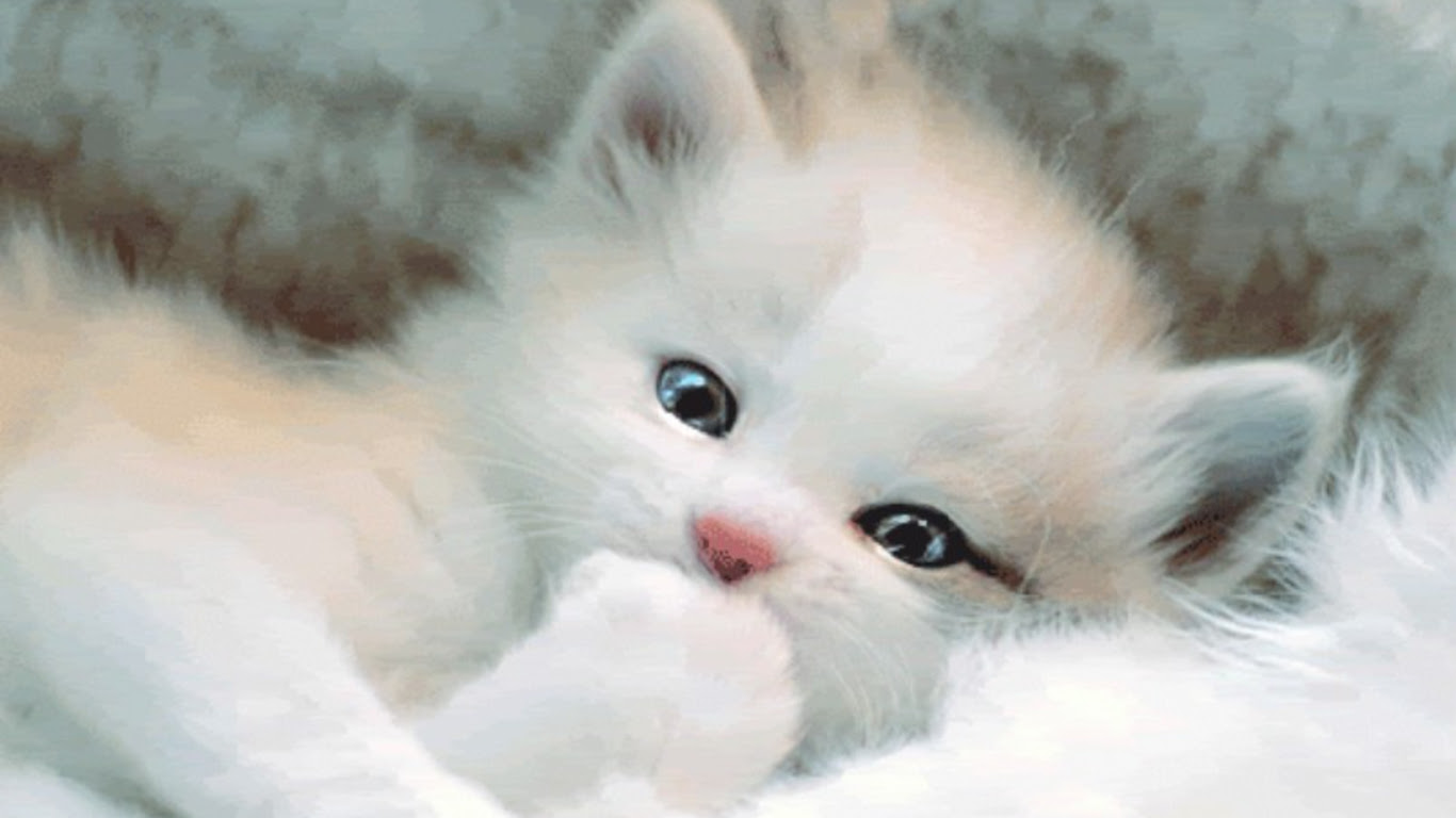 Cute Baby Cats Wallpapers Group 1366x768