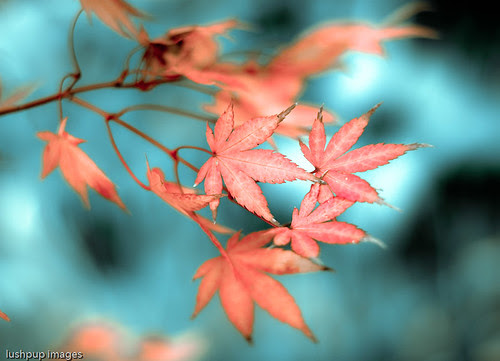...the autumn leaves...