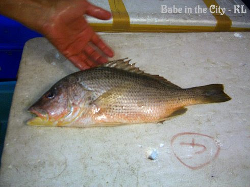 Our red snapper (hoong joe)