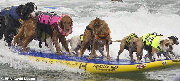 Dari berbagai jenis anjing mengambil bagian dalam turnamen ini