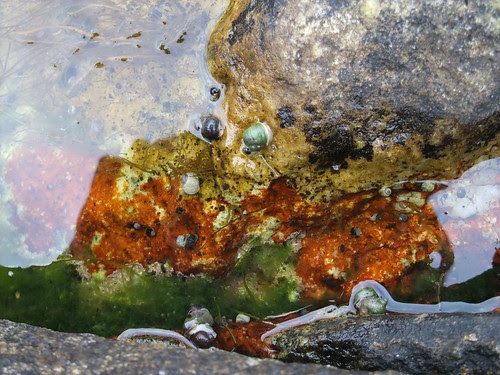 Peggy's Cove tide pool