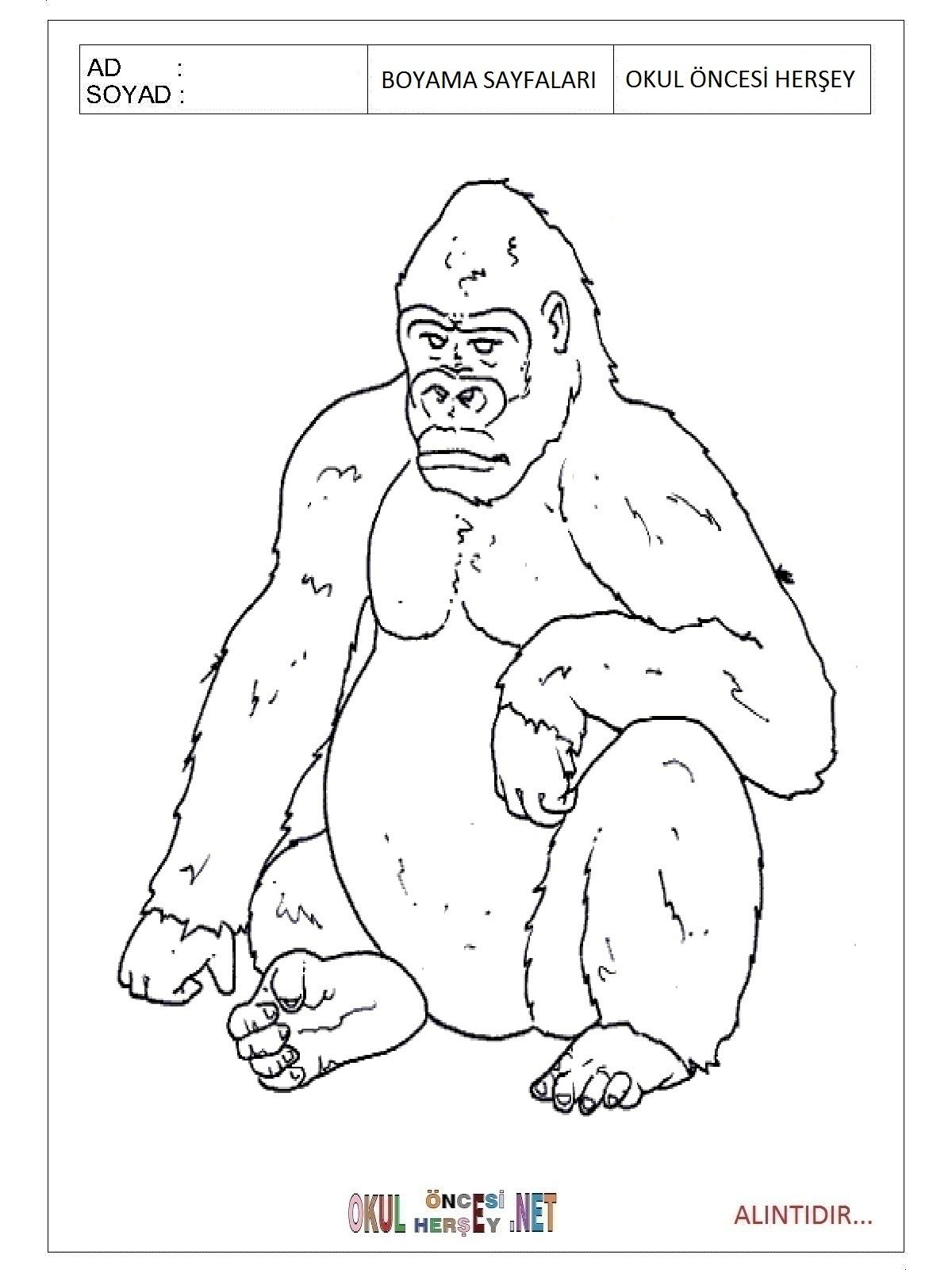 Goril Boyama Sayfaları
