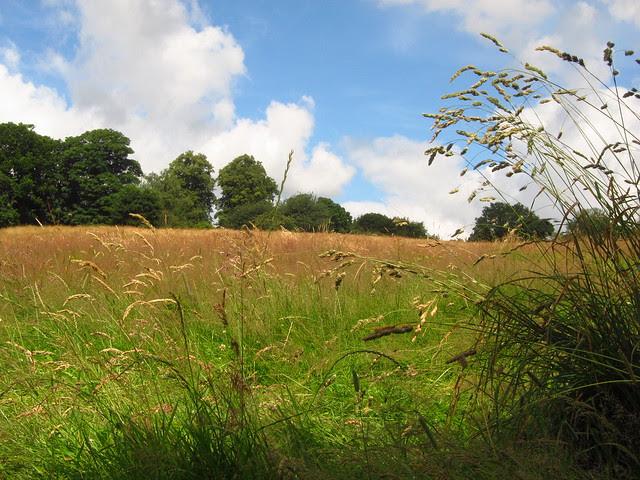Upper Cohen's Field, Hampstead Heath