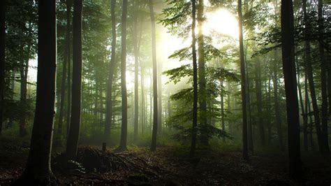 Bäume Wald Deutschland Sonnenlicht HDR Fotografie Kiefer