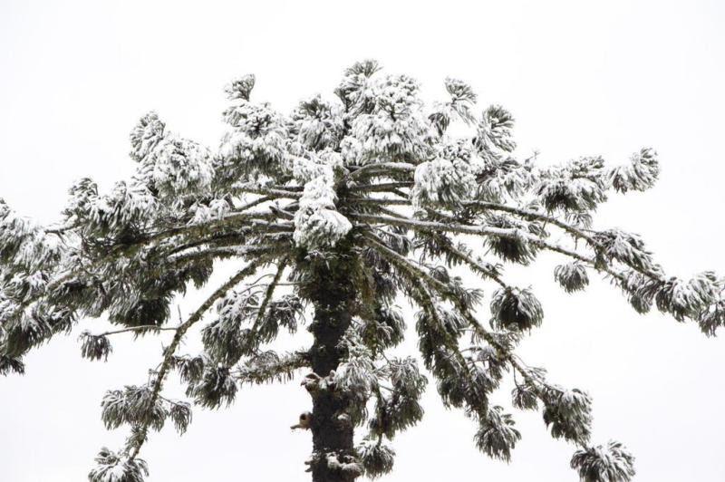 Leitora Marcia Zenf registrou a neve em Papanduva.:imagem 30