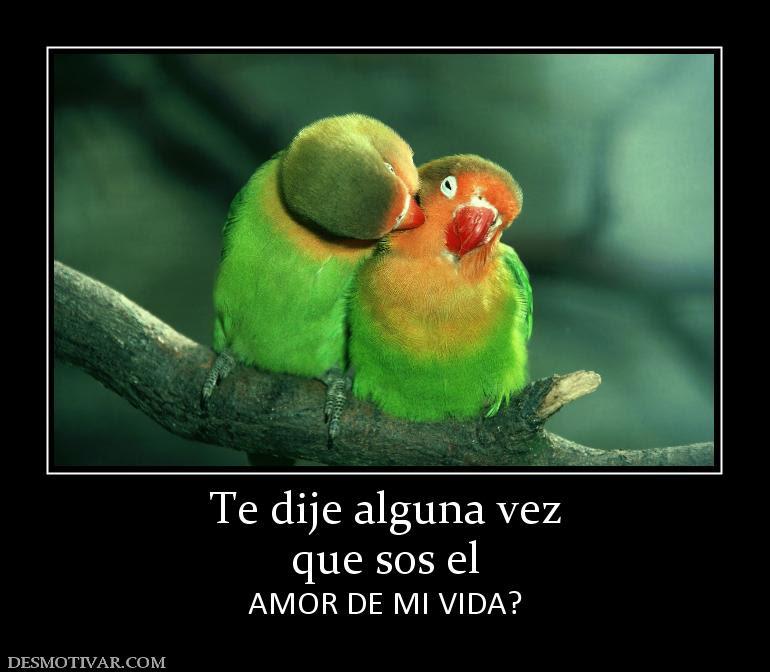Frasesamor Imagenes Con Frases Sos El Amor De Mi Vida