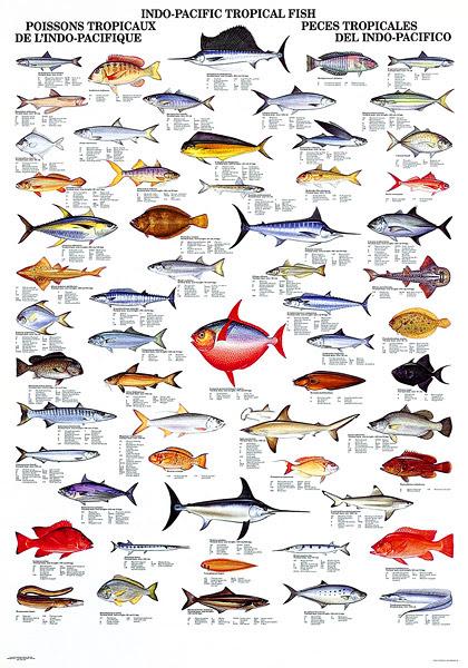 Aquarium Fish Names With Pictures Pdf Ugf