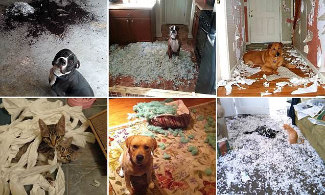 Pet owners share pictures of their destructive animals