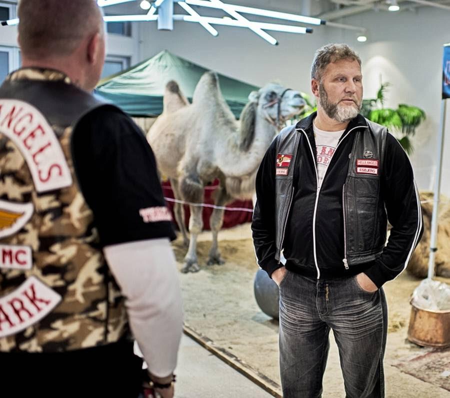 Jørn Jønke Nielsen sammen med en kamel til motorshow. (Foto: Jakob Jørgensen)