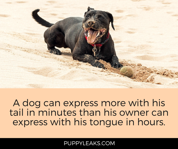 25 Cute & Funny Dog Quotes - Puppy Leaks