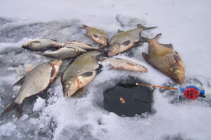 Ловля зимой на поплавочную удочку