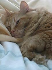 Jasper snuggling up in bed