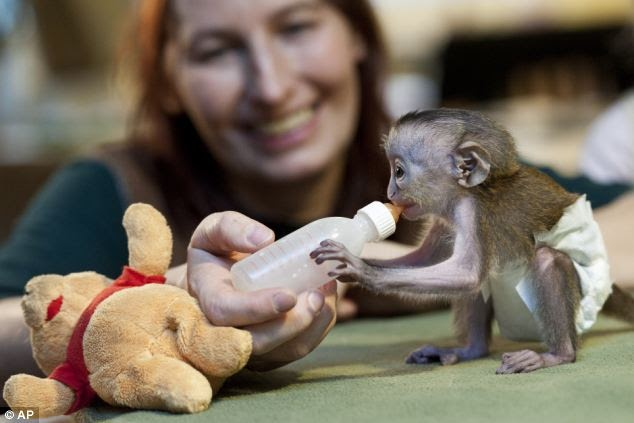 We Feel The Pain For Animals Will You Be Primate Rare -9404