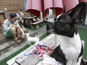 Homem brinca com seu cão em um 'dog cafe', cafeteria que permite a entrada de cães na Coreia do Sul; mercado pet cresce, enquanto consumo de carne de cachorro diminui (Foto: Lee Jin-man/AP)