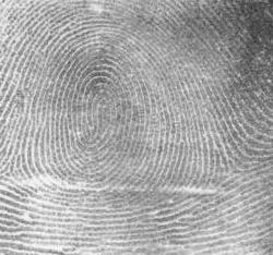 File:Fingerprint Whorl.jpg