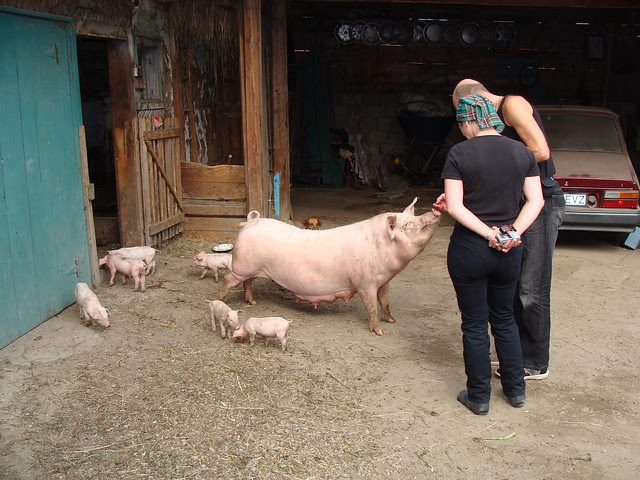 Angharad & Jon with Pista's sow and piglets