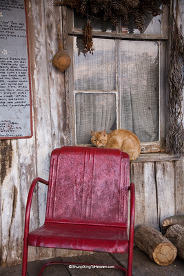 Orange Tabby, Penn's Store, Casey County, Kentucky (at the Boyle County Line)