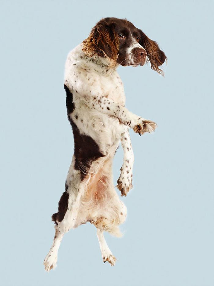 Un photographe fait voler les chiens et le résultat est une pure relaxation entre les propriétaires et les animaux