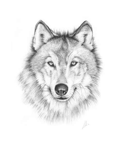 ideas  wolf drawing easy  pinterest anime wolf