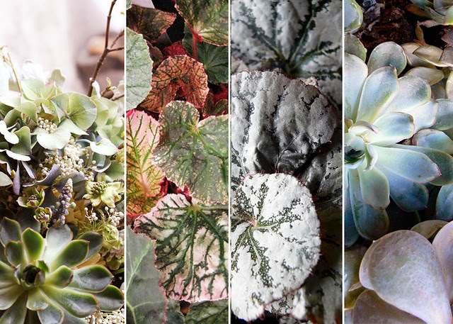 begonias and succulents