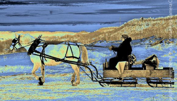 One Horse Open Sleigh La Crosse Area Camera Club