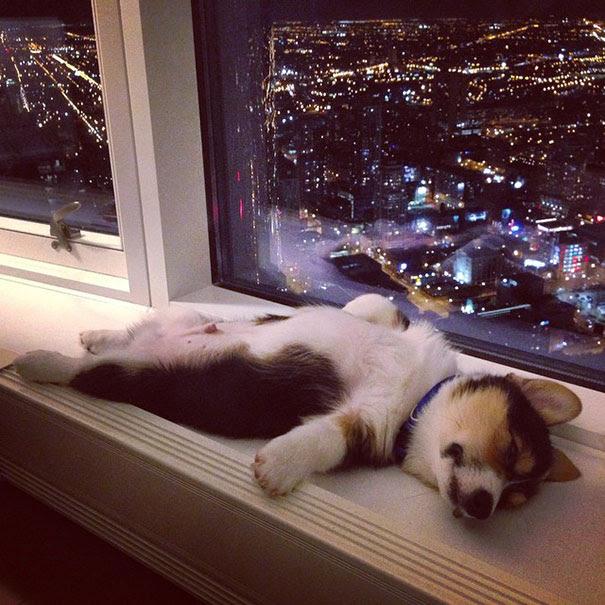 perierga.gr - Ζώα κοιμούνται παντού!