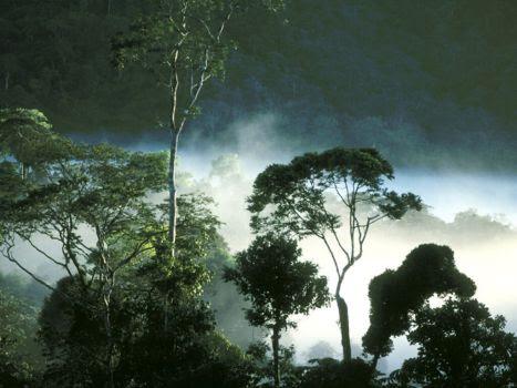 Hutan Basah
