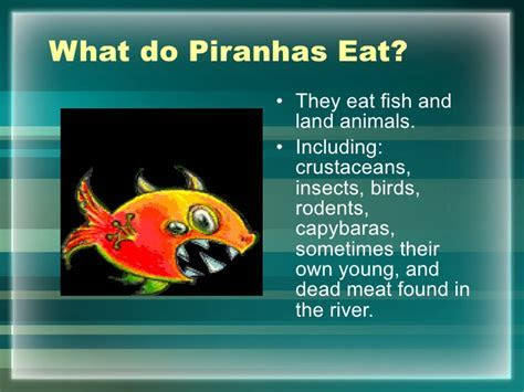The Hungry Piranha Final Project 2[1]