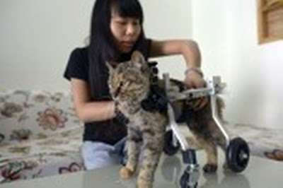 770 Koleksi Kursi Roda Untuk Kucing HD Terbaik