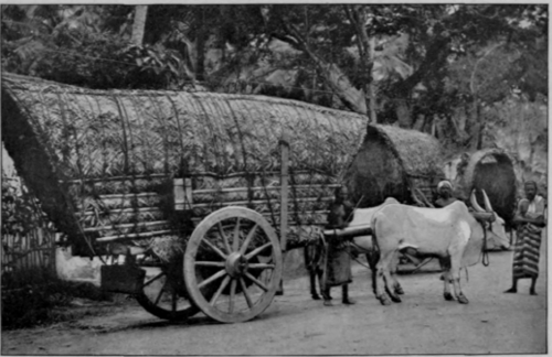 A Wagon Of Colombo