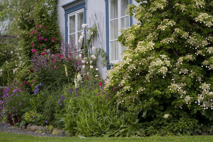 Dense with Cottage garden plants