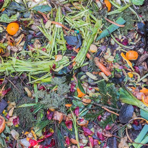 Free Images : leaf, flower, pattern, food, herb, produce