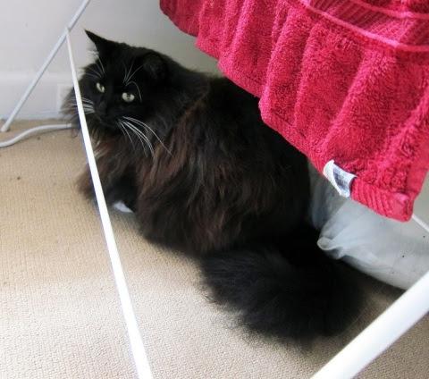 red-towel-cat1
