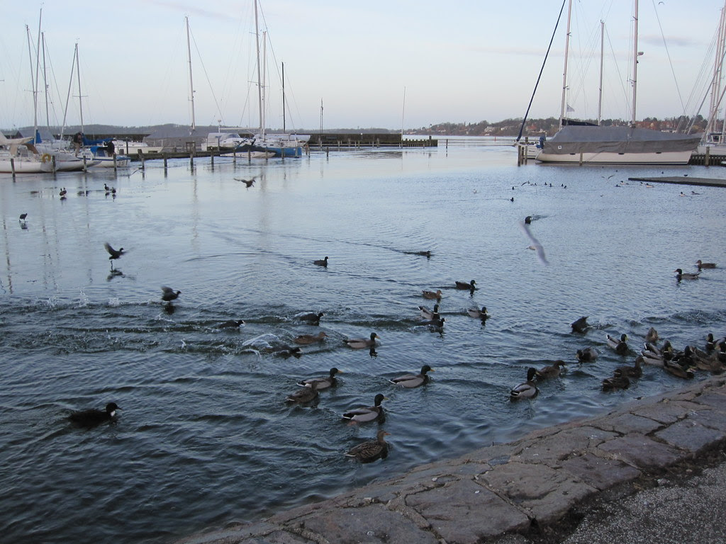 Roskilde Harbour