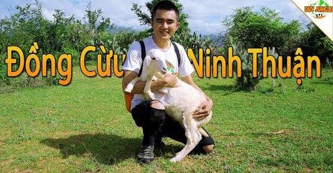 Sống ảo ở Đồng Cừu An Hòa Ninh Thuận | Duy Jungle