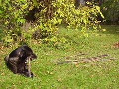 cody raking leaves 002