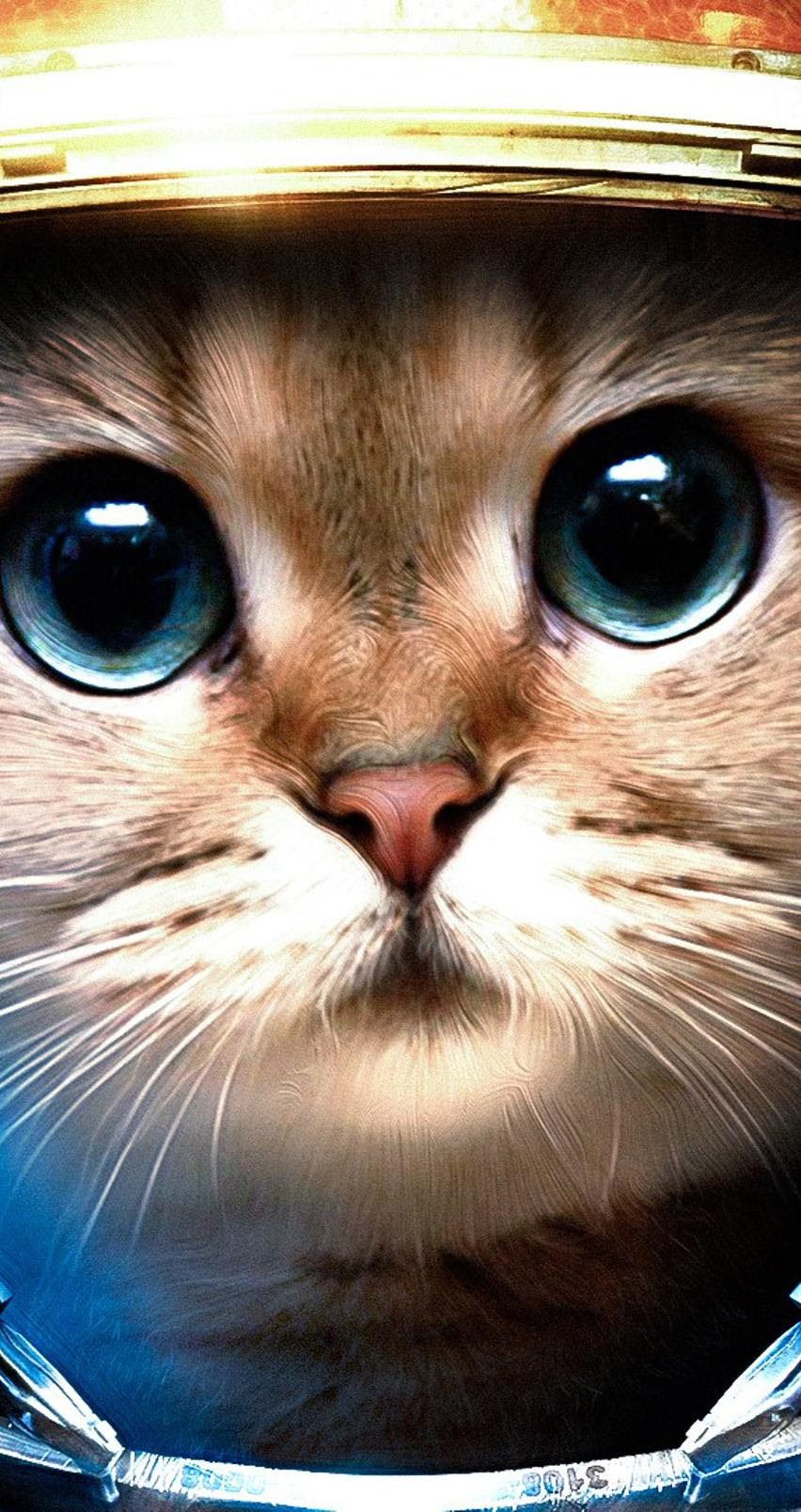 Cat From Space Hd Wallpaper