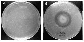 Fungus Eating Plastic