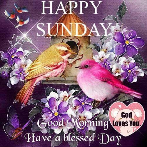 Happy Sunday Good Morning Have A Blessed Day Pictures Photos And