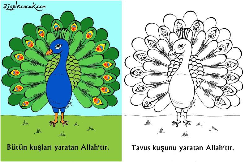 Tavus Kuşunu Yaratan Allahtır Okul öncesi Boyama Etkinliği