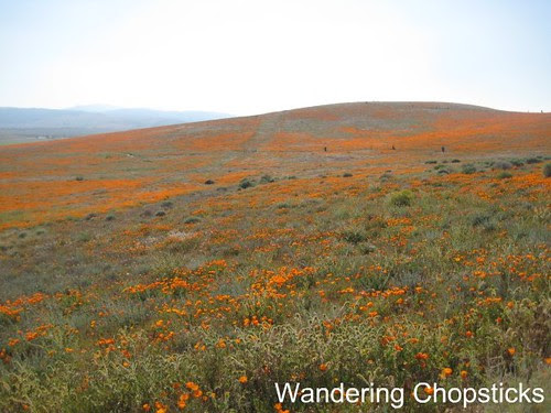 Antelope Valley California Poppy Reserve 3