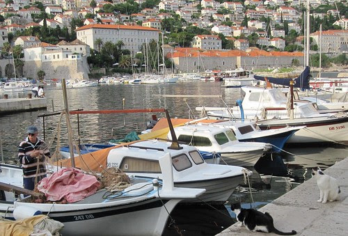 cats and boats in Dubrovnik