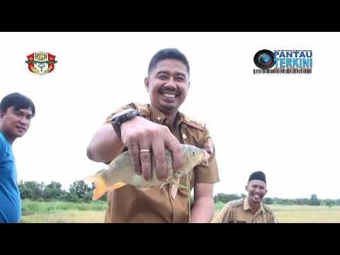 Video Pengembangan Sawa Mina Padi,Bersama Ikan