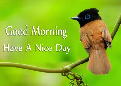 Download Good Morning Wishes With Birds Images Good Morning Images