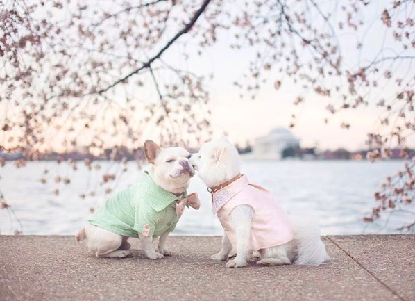 And last weekend, Sebastian and Luna had a truly Pinterest-worthy engagement shoot amidst the cherry blossoms in Washington, DC.