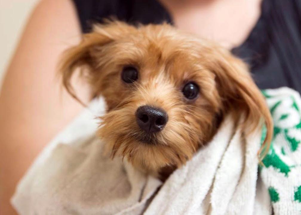 Cachorrinhos foram tratados e postos para adoção (Foto: San Diego Humane Society via AP)