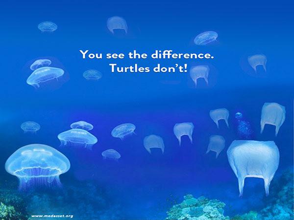 Kids Page Sea Turtle Conservation Bonaire