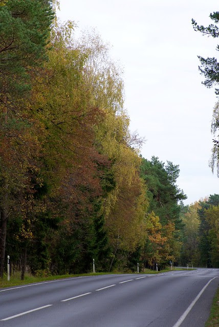 In the middle of autumn