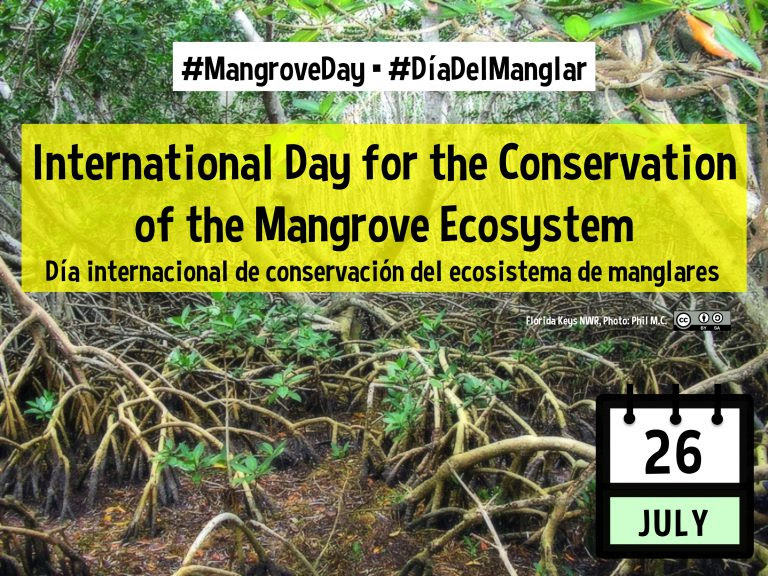 mangroveday-768x576